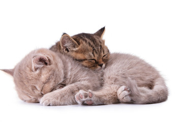 Two beautiful young sleeping kitten one on another
