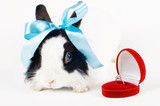 rabbit with blue ribbon and Wedding ring in case on white