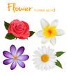 Big set of beautiful colorful flowers