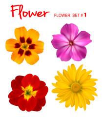 Big set of beautiful colorful flowers. Design flower set