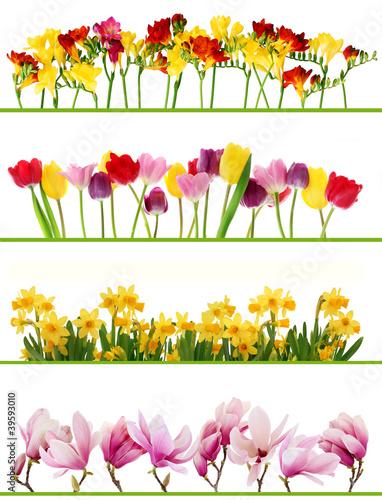 Foto op Aluminium Narcis Spring flower borders