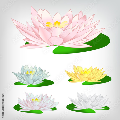 a set of colorful water lilies