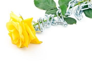 クサリを巻いたバラの花