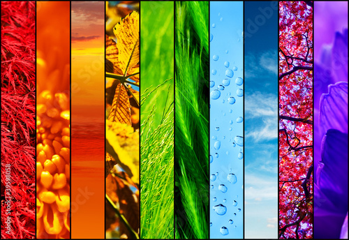 colourful nature collage