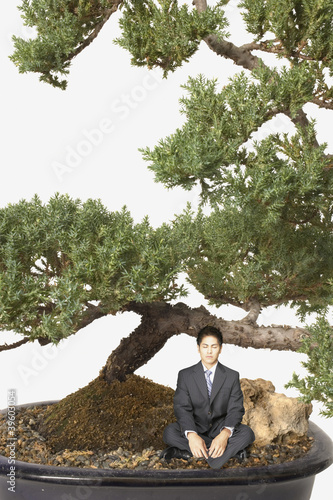 Businessman meditating by a giant bansai tree