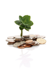 Coins and plant , isolated on white background
