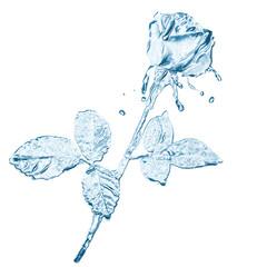 water flower splashes isolated on white