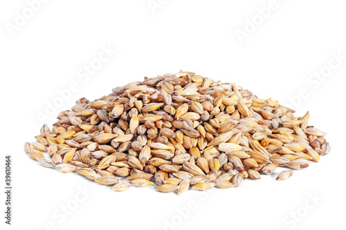 Pile Barley grain (Hordeum) isolated on white background.