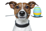 Fototapety dog with spoon and easter egg