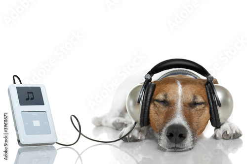 Dog listen to music with a music player © Javier brosch