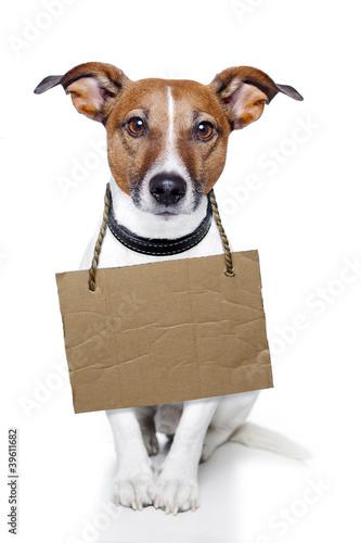 Fototapeta Dog with empty cardboard