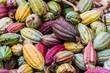Cocoa pods - 39611814