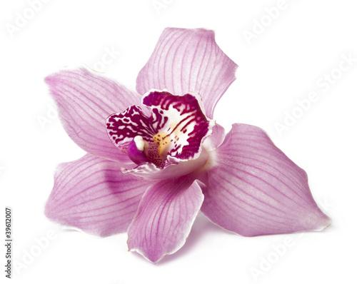 Fototapeten,eins,kurort,leaf,rosa