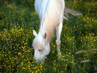 Horse grazed on a meadow