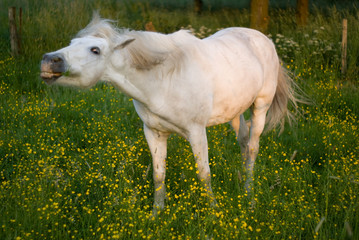 Horse grazed on a meadow