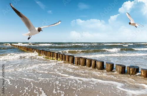 Leinwandbilder,ostsee,strand,ostteller,möwe im flug
