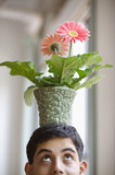 Close up of young adult man balancing potted flower on head