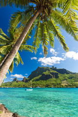 Palm Trees on Shoreline of Ocean at Moorea
