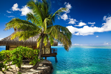 Tropical bungalow and palm tree next to amazing lagoon
