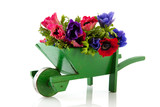 Bouquet Anemones in wheel barrow