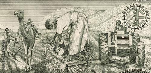Eritrean Farmers