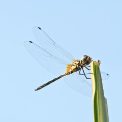 a dragonfly on the palm shoot