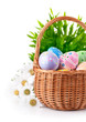 easter egg in basket with spring flower isolated on white