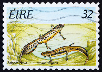 Postage stamp Ireland 1995 Smooth Newt