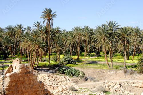 Aluminium Tunesië oasis de Mides, palmeraie 3