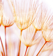 Streszczenie kwiat dandelion