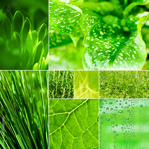green montage