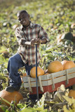 African boy standing with wagon in pumpkin patch