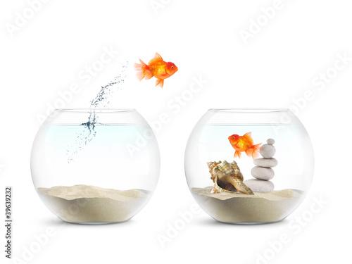 Poisson rouge aquarium amour photo libre de droits for Achat poisson rouge 92