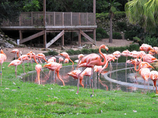 an image of flamingos in nature