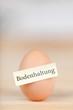 ein ei aus bodenhaltung
