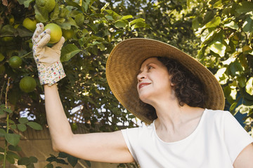 Senior Hispanic woman picking fruit