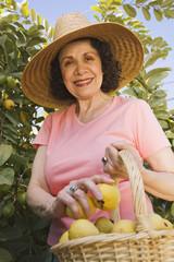 Senior Hispanic woman picking fruit