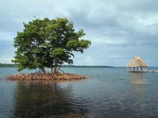 Mangrove and palapa