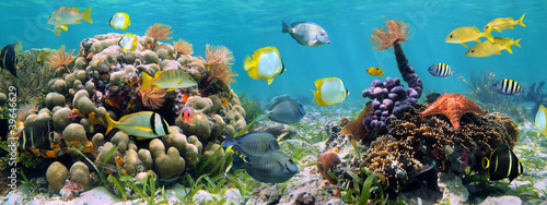 Leinwanddruck Bild Underwater panorama in a coral reef with colorful tropical fish and marine life