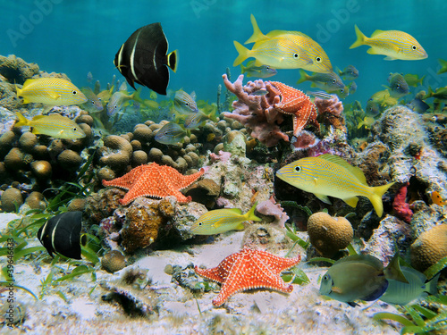 Leinwanddruck Bild Colorful sea life in a coral reef with shoal of tropical fish and starfish, Caribbean sea