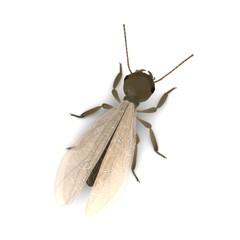 3d render of termite alate