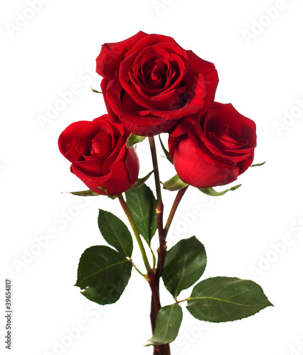 three dark red roses isolated on white - 39654817