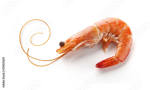 Deurstickers Schaaldieren Shrimp