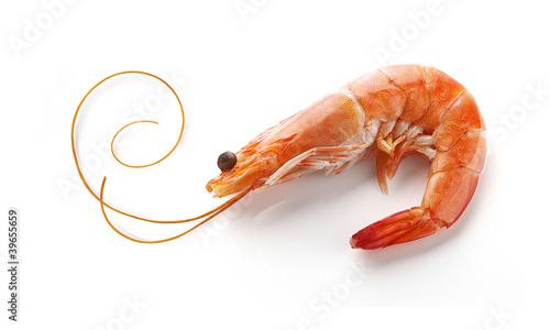 Leinwanddruck Bild Shrimp