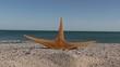 Estrella de mar en la playa