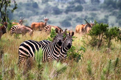Akagera National Park in Rwanda