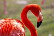 Fototapeten,vögel,wildlife,tier,flamingo