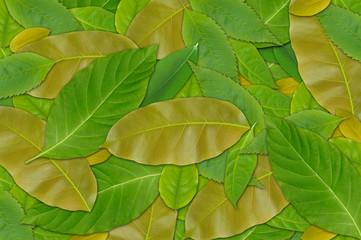 Leaf Background