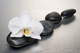 Fototapety White orchid and stones over wet surface with reflection