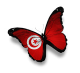 Tunisian flag butterfly, isolated on white